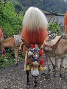 Mule Leader