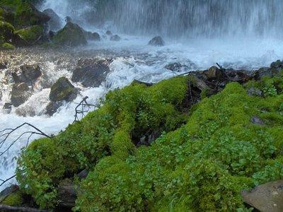 Oregon Water Falls