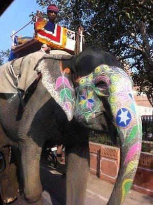Jaipur_-_Elephant.jpg