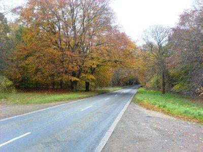 Thetford_Forest.jpg