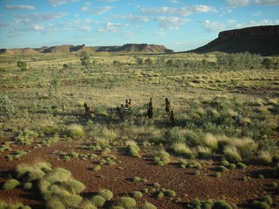 Horses running free on the Northern Territory plains