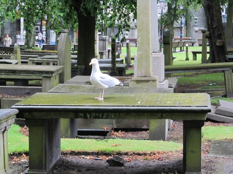 Relaxing in St Nicholas's Kirk in Aberdeen