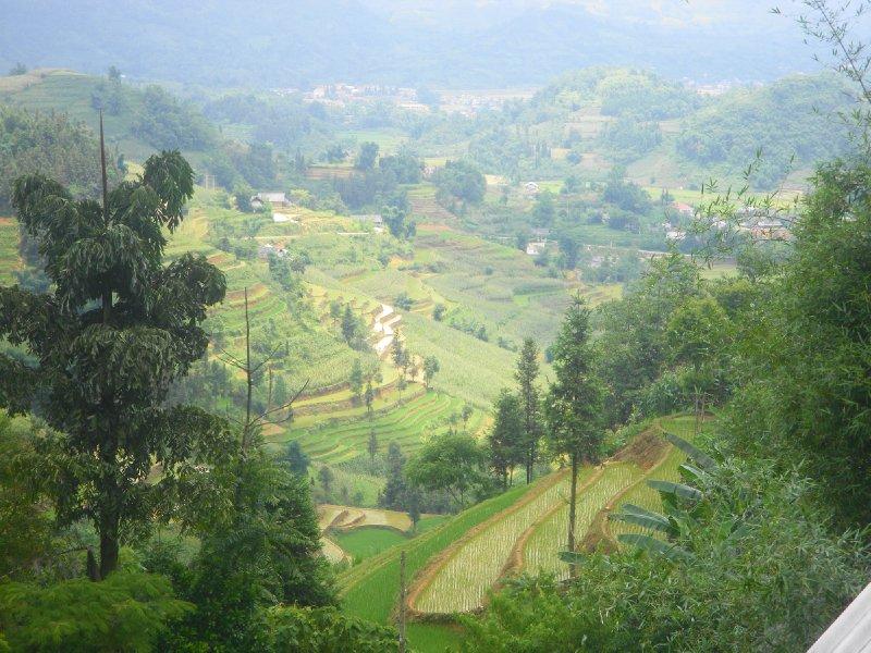 Bac Ha rice fields