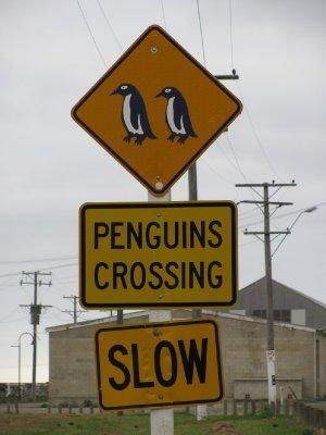 זהירות פינגווינים