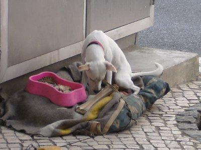The shoe polishers dog