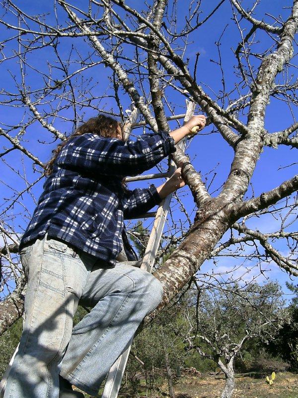 QdV Moi exfoliating the cherry tree