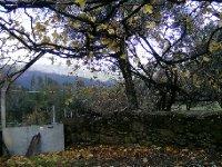 Abitureira garden