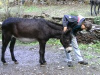 Pete and his donkey