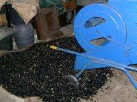 Senhor Fernando's olives