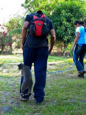 Ometepe - Racoon passengers