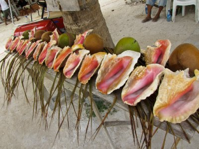 Caye Caulker, Belize - Conch shells for sale