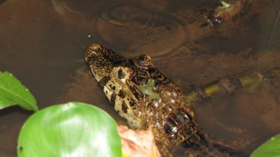 Pantanal-10.jpg