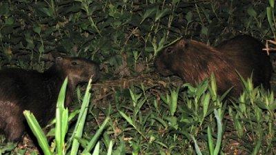 Pantanal-13.jpg