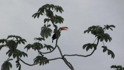 Pantanal-41.jpg
