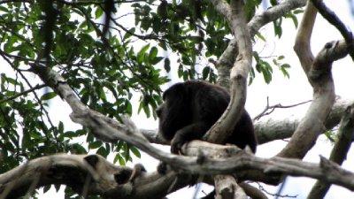Pantanal-54.jpg