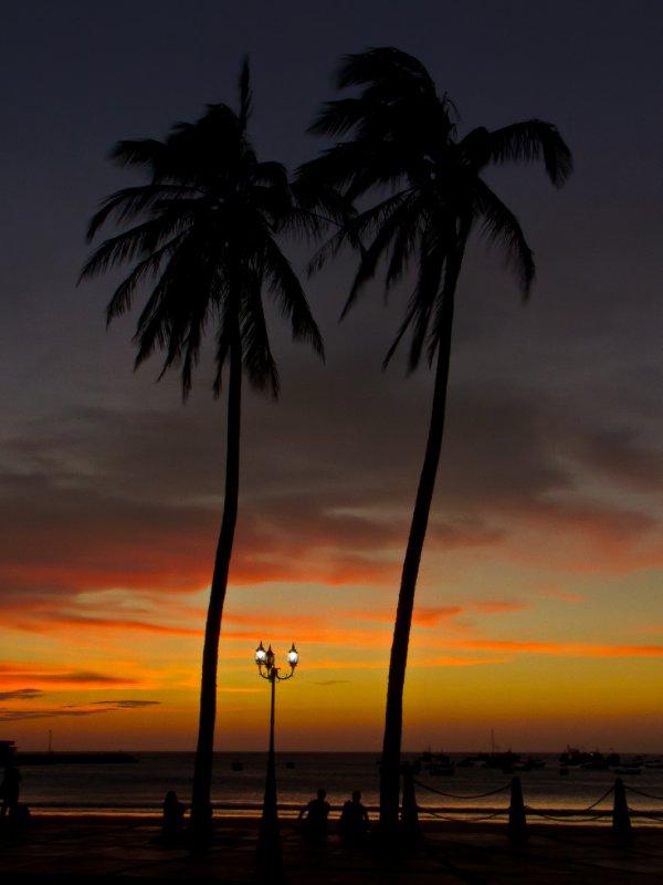 San Juan, Nicaragua - Palm trees at dusk