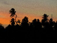 San Blas, Panama - Palm silhouettes at sunset