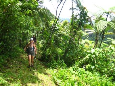 Hiking through the rainforest