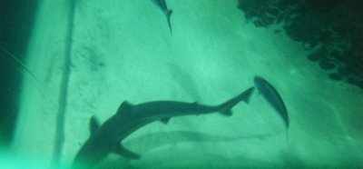 View of sharks in the shark cage