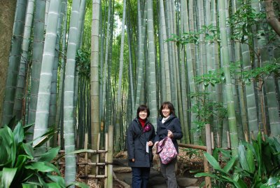 Walking in the bamboo forest