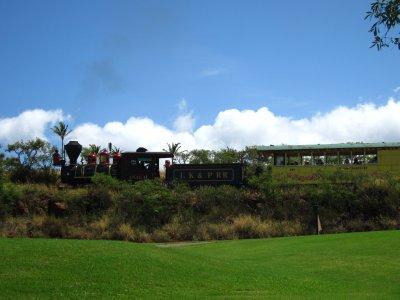 The sugarcane train going through the golfcourse