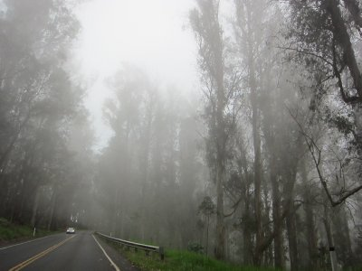 Driving through a foggy patch