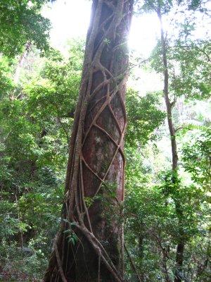 Fraser Rainforest