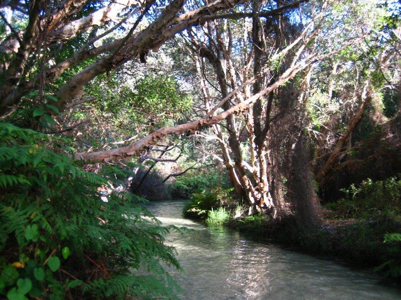 Wading through Eli Creek