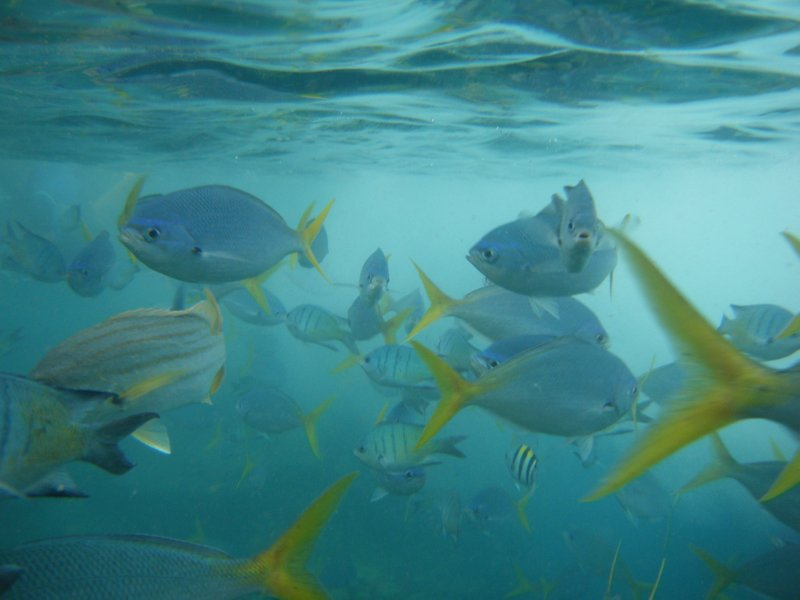 Fishie Business in the Whitsundays