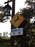 Watch for Deer!