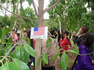 american_tree.jpg