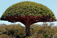 socotra_island_4