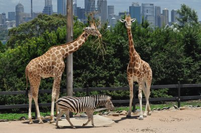 Taronga Zoo and the Sydney skyline