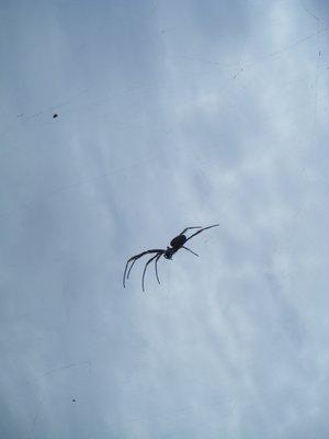 Big dirty spider
