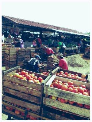 Mercado Agropecuario
