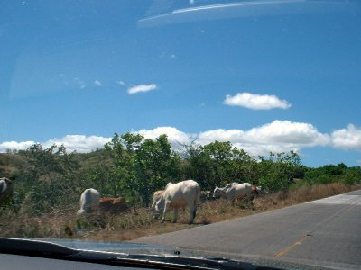 Panama_pics_046.jpg
