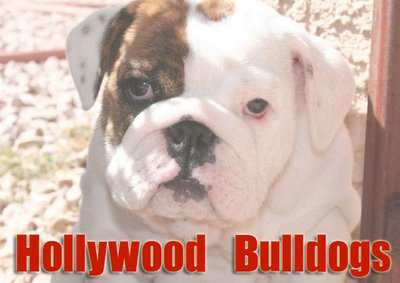 Hollywood Bulldogs