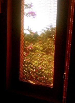 View from hotel window - roses and palms