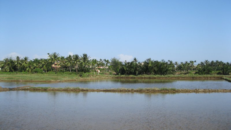 Around the rice fields in Hoi An (3)