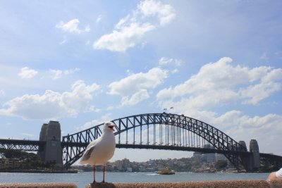 Seagull & Sydney Harbour Bridge