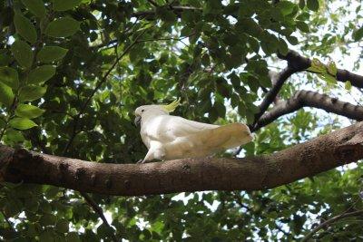 Bird in Sydney Botanical Gardens