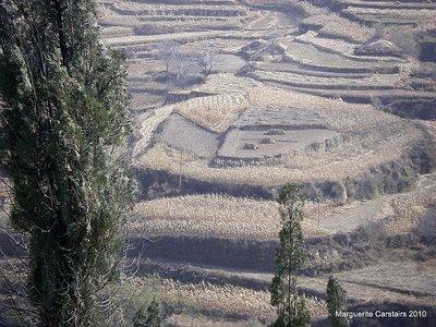 Fashan Village Corn Crops