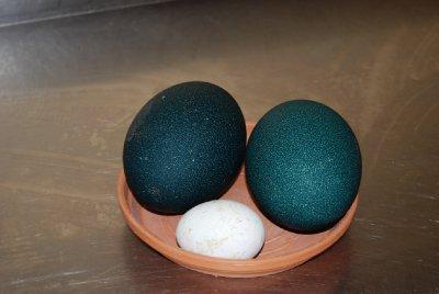 To emu egg og et storkeegg (eventuellt to store øyne og en liten nese :-))