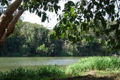 Utsikt fra en benk i regnskogen!!!!!! :-)