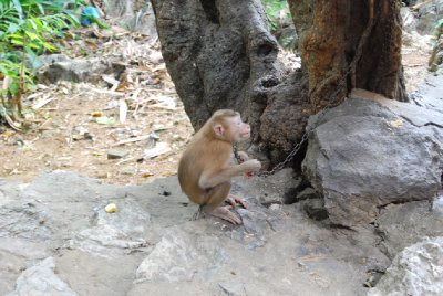 Stakars lille apen!!!!