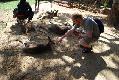 Øyvind møter en kenguru :-)