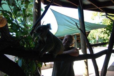 å fore koalaene er ikke alltid kjedelig :-p