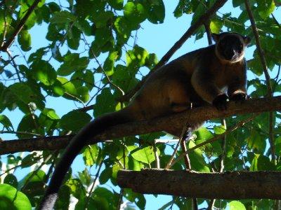 Trekenguru!!!!! Det hadde jeg ikke sett før!!!!!!!!!!! Vanvittig tøff skapning!!!!! Er rett og slett en kenguru som bor oppe i trærne :-)