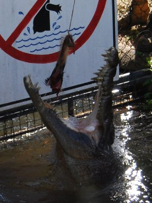 Krokodille foring :-D