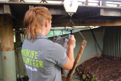 Ikke alltid like lett å bli kvitt koalaen igjen heller etter at man har lettet dem opp! Kluver vil heller sitte på armen enn å sitte på den teite pinnen!